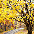 Fall Road by Sharon Dominick