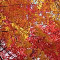Fall Saint Louis 1 by Monte Landis