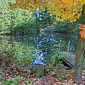 Fall Scene By Pond by Brenda Brown