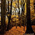 Fall Scene In Bidwell Park by Robert Woodward