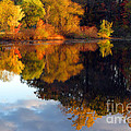 Fall Scene by Olivier Le Queinec