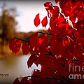 Fall Scenery by Dolores McKenzie