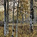 Fall by Scott Moss