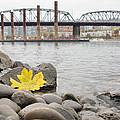 Fall Season Along Portland Willamette River By Marina by David Gn