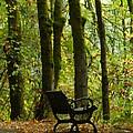 Fall Seating  by Susan Garren