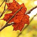 Fall by Shyam Prasad