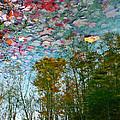 Fall Sky by Chris Sotiriadis