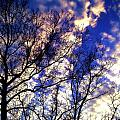Fall Sky by Michelle Flory