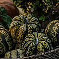 Fall Squash Harvest by Michael Moriarty