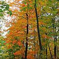 Fall by Stephanie Kripa
