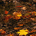 Fall Stream Bed by Paul W Faust -  Impressions of Light