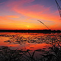 Fall Sunset In The Mead Wildlife Area by Dale Kauzlaric