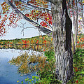 Fall Tree by Carol Flagg