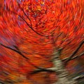 Fall Tree Carousel by Juergen Roth