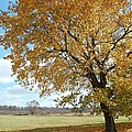 Fall Tree by George Bogosian