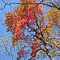 Fall Trees 2 Of Wnc by Duane McCullough