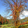 Fall Trees 5 Of Wnc by Duane McCullough