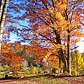 Fall Trees by Duane McCullough