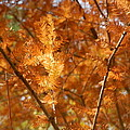 Fall Trees II by Ione Hedges