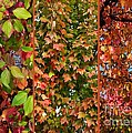 Fall Trio Collage by Carol Groenen