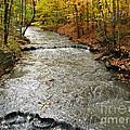 Fall Waters by Michael Krek