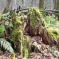 Fall Woods by Elaine Mikkelstrup