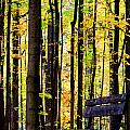 Fall Woods In Michigan by Michael Arend