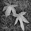 Fallen Autumn Leaves In The Grass During Morning Frost by Randall Nyhof