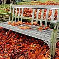 Fallen Bench by Dwight Pinkley