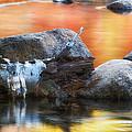 Fallen Birch by Michael Hubley