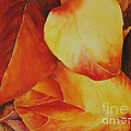 Fallen Colors by Glenyse Henschel