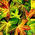Fallen Colors by Maurisca Sardju
