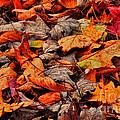 Fallen Colors by Randy Rogers