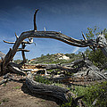 Fallen Dead Torrey Pine Trunk At Torrey Pines State Natural Reserve by Randall Nyhof