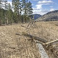 Fallen Fence by John Greaves