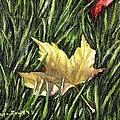 Fallen From Grace by Shana Rowe Jackson