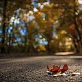 Fallen by Gina Herbert
