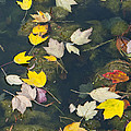 Fallen Leaves 2 by Phyllis Taylor
