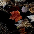 Fallen Leaves by Alfredo Martinez