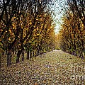 Fallen Leaves by Barbara Chichester