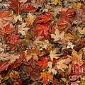 Fallen Leaves by Bob Phillips