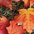 Fallen Leaves by Brigitte Mueller