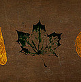 Fallen Leaves by Eduardo Tavares