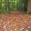 Fallen Leaves by Elizabeth Dow