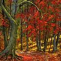 Fallen Leaves by Frank Wilson