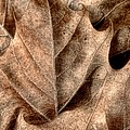 Fallen Leaves I by Tom Mc Nemar