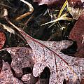 Fallen Leaves by John Rizzuto