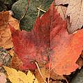 Fallen Leaves by Kathy DesJardins