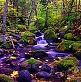 Fallen Leaves On The Rocks by Jeff Swan