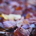 Fallen Leaves Road by Irina Wardas